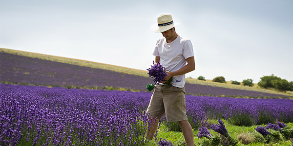 Lavender producer